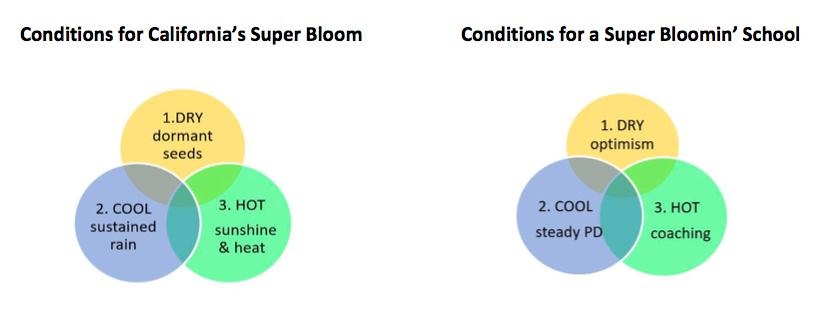 Conditions for Super Bloom and Blooming Schools
